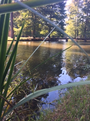 Nestled behind the chapel, the pond stays reasonably quelled throughout the day. (Photo: Tyler Petro)